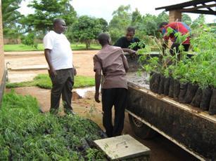 Hier werden Setzlinge verladen und zum Pflanzen an ihren Bestimmungsort gebracht.